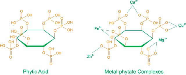 Acido fitico