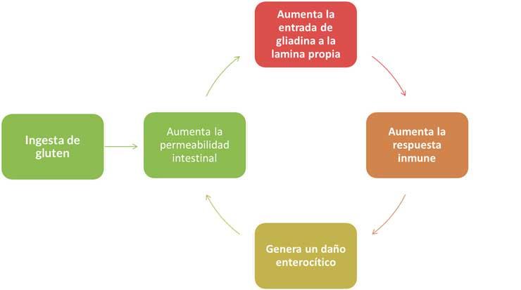 Efectos del gluten en el intestino